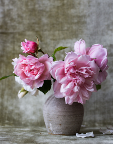 ICON rose